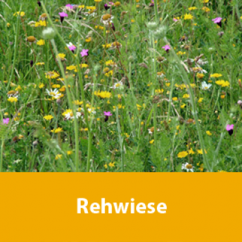 Rehwiese